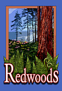 Michelle Scott - Redwoods in California