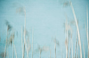 Camera Digital Art - Reed Abstract 5 by Iris Lehnhardt