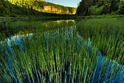 Jakub Sisak - Reed Crescent Lake Outlet