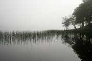 Reed Bed Prints - Reeds and shore in the mist Print by Gary Eason