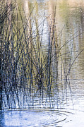 Kate Brown Framed Prints - Reeds II Framed Print by Kate Brown