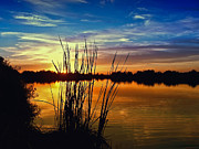 Dramatic Photos - Reeds in Lake Sunset by JaqStone