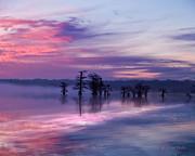 Reelfoot Lake Sunrise Print by J Larry Walker