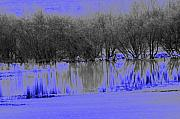 Abstract.trees Digital Art Prints - Reflect blue Print by Carol Lynch
