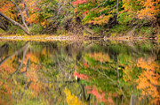 Landscapes Posters - Reflected Autumn Poster by Gregory Ballos