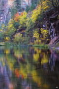 West Fork Oak Creek Canyon Posters - Reflected Fall Poster by Peter Coskun