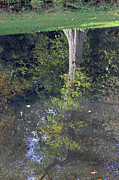Tony Murtagh - Reflected Tree