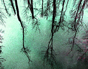 Joseph Tese Prints - Reflected Trees Print by Joseph Tese