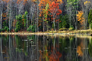 Ny Landscape Digital Art Posters - Reflecting Autumn Poster by Christina Rollo