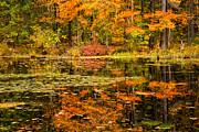 Karol  Livote - Reflecting Colors