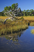 Reflecting Tree Prints - Reflecting Tree in Jekyll Island Marsh 1.3 Print by Bruce Gourley