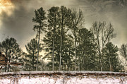 Conway Arkansas Prints - Reflecting upon Snowy Trees Print by Jason Politte