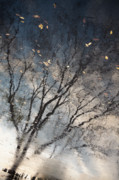 Reflection Print by Derek Selander