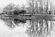 Bare Trees Metal Prints - Reflection in Black and White Metal Print by Julie Palencia