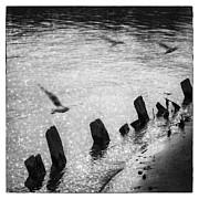 Reflection In Mae Khong River Print by Setsiri Silapasuwanchai