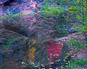 Oak Creek Photo Originals - Reflection in the Creek by Brian Lambert