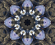 Seashell Fine Art Posters - Reflection  Kaleidoscope Poster by Jordan Blackstone