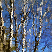 Abstract Earth Posters - Reflection Of Aspen Trees Against Blue Sky Poster by Christina Rollo