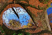 Linda Kloster - Reflection of Fall