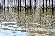 Nature Study Prints - Reflection of Fence  Print by Sonali Gangane