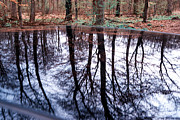 Mirroring Prints - Reflection of trees in a forest in car roof Print by Matthias Hauser