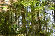 Trees Reflecting In Water Prints - Reflection of woods Print by Sonali Gangane