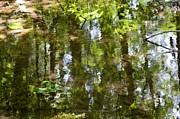 Reflection Of Woods Print by Sonali Gangane