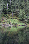 Landscape. Mountain Trees Water Bush Art - Reflections - 0014 by S and S Photo