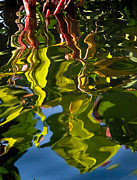 Reflections In Water Prints - Reflections 241 Print by Phil McCollum