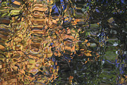 Adrienne Lattuca Metal Prints - Reflections Metal Print by Adrienne Lattuca
