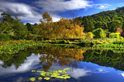 Lilly Pad Prints - Reflections Print by Damian Morphou