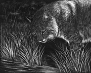 Bobcat Drawing Prints - Reflections Print by Heather Ward