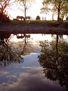 Lake Relections Prints - Reflections Horse Print by Rebecca Overton