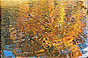 Reflections In Water Prints - Reflections in Gold Print by Ira Shander