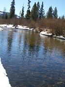 Jewel Hengen - Reflections in the Creek