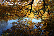Trees Reflecting In Water Metal Prints - Reflections Metal Print by John Telfer