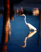 White Crane Prints - Reflections Print by Michael Pickett