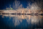 Refelctions Photos - Reflections by Noel Pennington