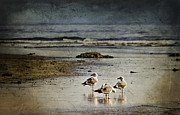 Reflections Of A Seagull Minute Print by Diane Schuster