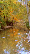 Golds Prints - Reflections Of An Autumn Day Print by Kay Novy