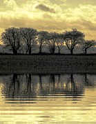 Steven Brennan Prints - Reflections Of Gold Print by Steven Brennan