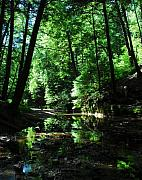 Creeks Prints - Reflections Of Green Print by Mel Steinhauer
