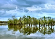 Indiana Flooding Photo Prints - Reflections of Spring Print by Julie Dant