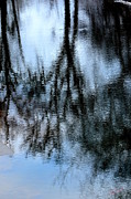 Karen Kersey - Reflections of trees