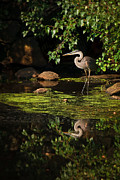 Concord Massachusetts Metal Prints - Reflective Heron Metal Print by Sylvia J Zarco