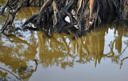 Beach Photographs Art - Reflective Stump by Bruce Gourley