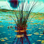 Reflective Water Photos - Reflective Water Plants by Bonnie Bruno