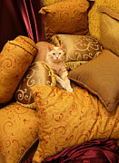 Pillow Photos - Regal Feline by Amy Cicconi