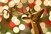 Christmas Lights Photos - Regal Reindeer by Amy Cicconi