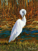 Great Egret Posters - Regal White Poster by Tim Davis